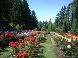 taman mawar bedugul bali