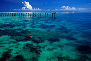 paradise diving derawan island