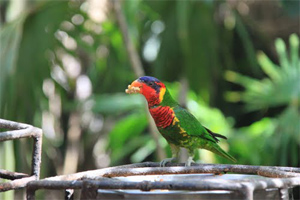 Interact With Birds And Reptiles In Bali Bird Park Bali Tour And
