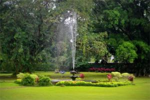 bogor botanic garden indonesia
